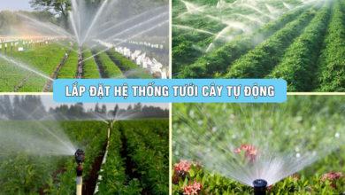 Lắp Hệ Thống Tưới, Phun Mưa Nhỏ Giọt tự động tại Đà Nẵng